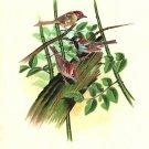 Sparrow Bird Painting Handmade Indian Miniature Silk Ethnic Folk Home Decor Art