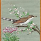 Yellow Billed Cuckoo Bird Art Handmade Indian Miniature Ornithological Painting