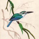 Indian Miniature Painting Handmade Mangrove Kingfisher Bird Wild Life Nature Art