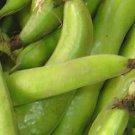 Aquadulce Fava Bean ~ Broad Bean Seeds