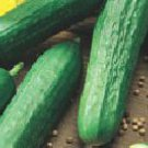 Tendergreen Burpless Cucumber Seeds