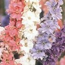 Larkspur Seed Mix Seeds