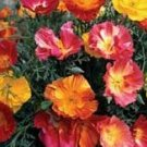 Mission Bells California Poppy Seeds