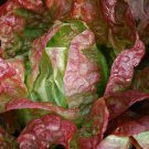 Paris Bistro Lettuce Mix Seeds