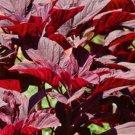 Red  Amaranth Seeds