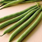 E-Z Pick Bush Bean Seeds
