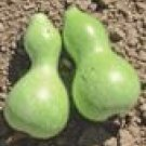 Baby Bottle Gourd Seeds