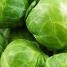 Organic Catskill Brussels Sprouts Seeds
