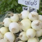 Sweet White Spanish Onion Seeds