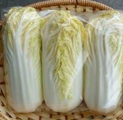 Chinese Cabbage 'Tender Gold' Seeds