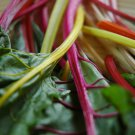 Neon Lights Swiss Chard Mix Seeds