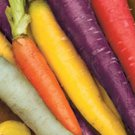 Rainbow Carrot Seed Mix