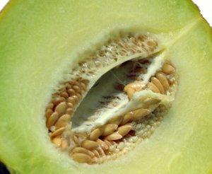 Galia Melon Seeds