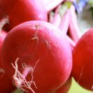 Turnip, Japanese Red Round Turnip