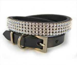 Dating studded collars online dog