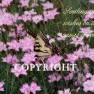 Flowers & Butterfly 2