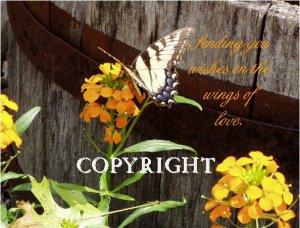 Flower's & Butterfly