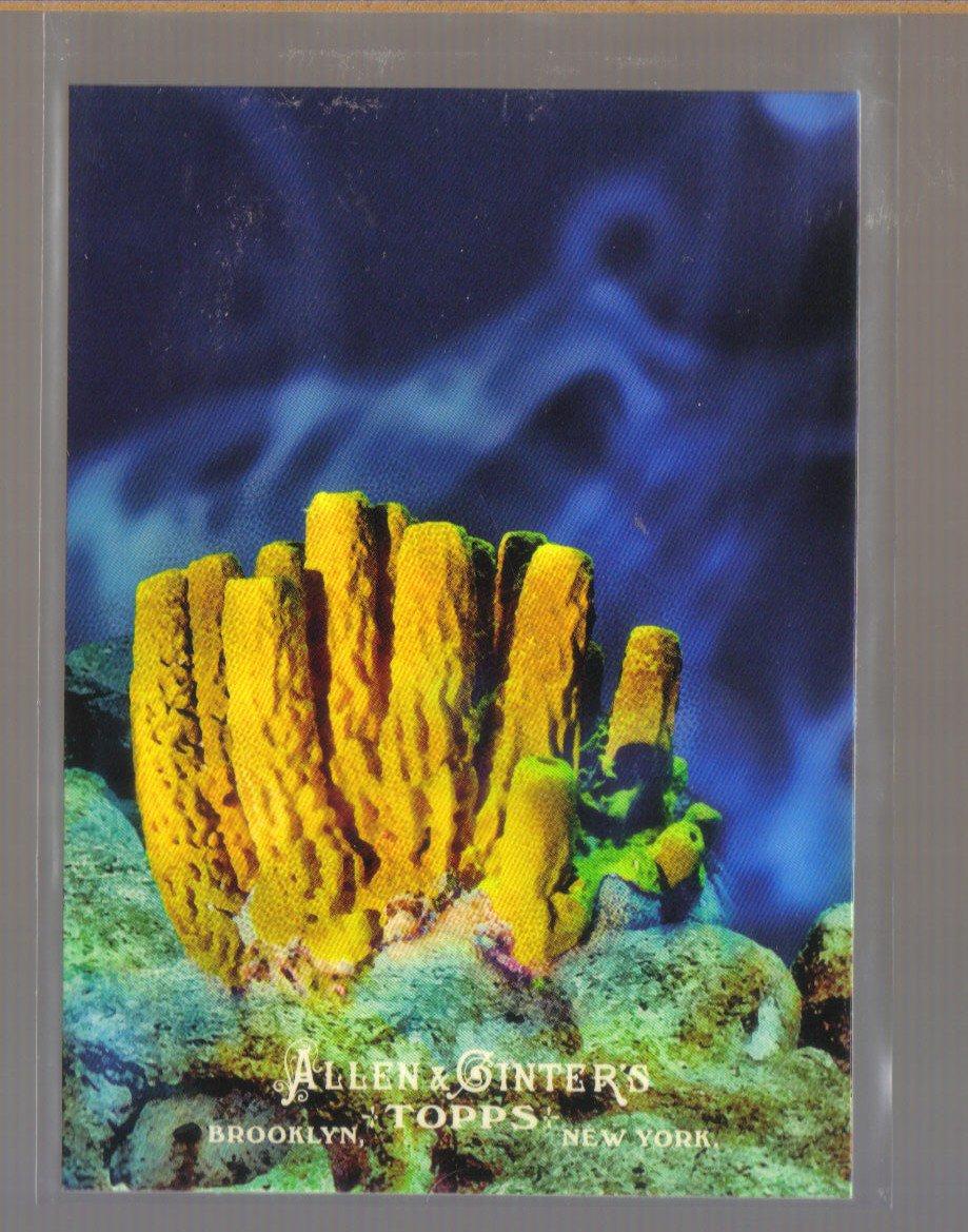 2011 Topps Allen & Ginter Ascent of Man #4  PORIFERA   Sponges