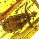 Assasin bug fossil insect  inclusion in Baltic amber