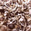 Moringa Oleifera Seeds (1000 Pack)