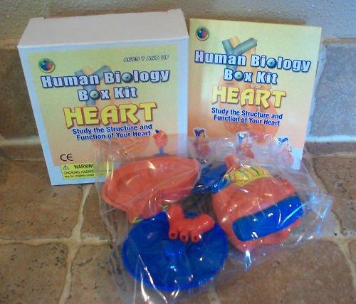 2 ~ Human Biology Box Kits ~ Heart ~ 3D Model