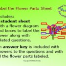 Label the Flower Parts Diagram and Corresponding Questions PDF