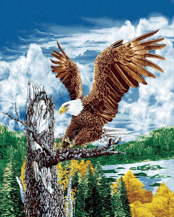 Eagle on tree branch, mink style soft and warm queen size blanket, Q933E
