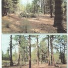 .96 Acre Lot Chiloquin, Oregon
