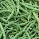 25 Organic Heirloom Green Bush Bean 'Burpee Stringless'