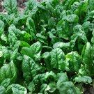 1000 Bulk Spinach Giant Noble Seeds