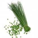 1000 Bulk Culinary Chives Seeds