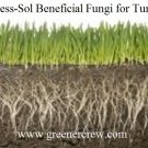 Turfgrass Beneficial Fungi