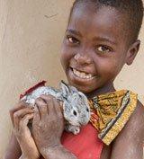 World Vision Gift of 1 Rabbit