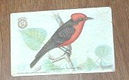 Arm & Hammer Vermillion Flycatcher Second Series No. 3 Trading Card