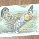 Arm & Hammer Prairie Chicken 4 th Series No. 27 Trading Card