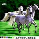 White Horses, Q955