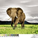 Elephant,  Q983