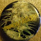 MARIJUANA HINDU KUSH pinback button badge 1.25""