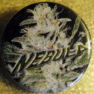 MARIJUANA NEBULA pinback button badge 1.25""