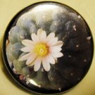 PEYOTE pinback button badge 1.25""