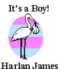 Its a Boy! Return Address Labels