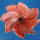 B684 Cut shells- Mimachlamys sanguinea-04, 12 pcs