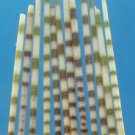B701 Sailors Valentine Craft shells- Echinothrix calamaris spine, 5 grams