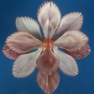 B571 Cut shells- Mimachlamys sanguinea-18, 12 pairs