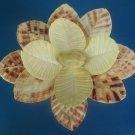 B533 Cut shells- Annachlamys macassarensis-02, 12 pairs