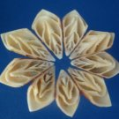 Cut shells - Mitra eremitarum, 20 pcs # 01-020401