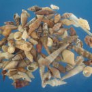Sailors Valentine Craft shells- Assorted Tiny Shells, 1 oz, # 02-021003