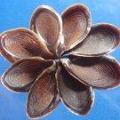 B651 Sailors Valentine Craft shells  Fasciolaria shell operculum-01,   6 pcs
