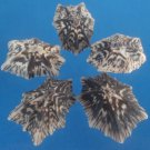 B607 Limpets - Patelloida saccharina-02, 1 oz