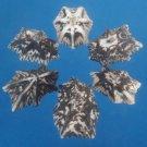 B607 Limpets - Patelloida saccharina-01, 1 oz